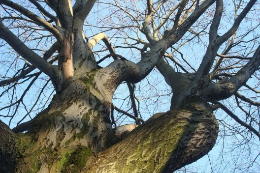 Bevorzugt Bäume (Obstbäume, Apfelbaum) schneiden - Wann & wie? YW25