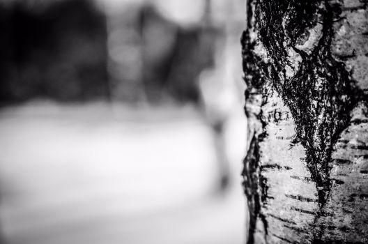 Winter, Borke, Rinde, Stamm, Baum
