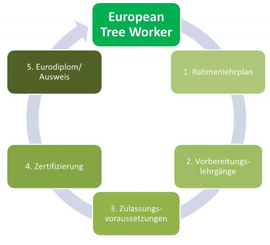 European Tree Worker - ETW