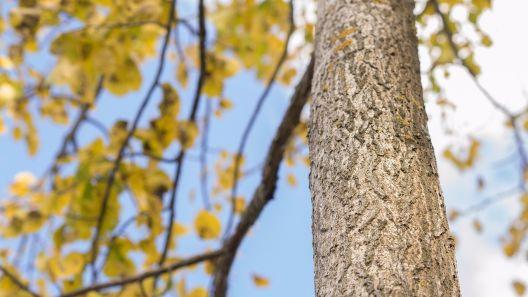 Baum Richtig Fallen Lassen Tipps Kosten 2017
