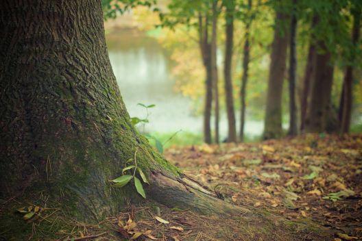 Bäume Umpflanzen wie sie ihren baum richtig umpflanzen tipps tricks